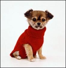 ~~~จริงหรือเท็จ: ช็อกโกแลตเป็นพิษต่อสุนัข~~~