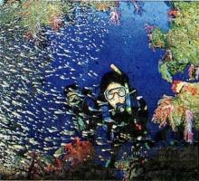 หากน้ำทะเลอุณหภูมิสูงขึ้น ปลาอาจเปลี่ยนแปลงนิสัย หรือพฤติกรรมได้