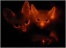 ...แมว เรืองแสง!!!