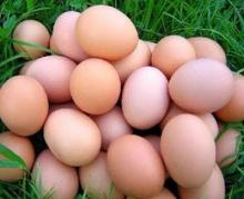 ฟันธงไข่เกิดก่อน ไก่ แน่