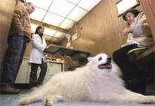 ไม่ต้องผ่าตัด-ใช้สเต็มเซลล์รักษาสัตว์