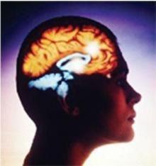 ฮอร์โมนเลปตินในสมองมีส่วนสัมพันธ์กับโรคอัลไซเมอร์