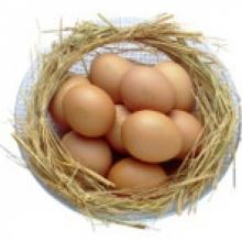 5 เรื่องน่ารู้ของไข่ไก่