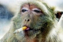 สกัดการสร้าง มนุษย์วานร ด่วน หวั่นเกิดลิงหัวแหลมเท่ากับคน