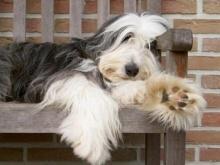 วิจัยพบชีวิตหมาพันทาง ฉลาดเหนือกว่าพันธุ์แท้