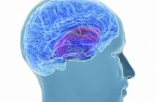 คลื่นสมองสามารถบอกได้ว่าเราได้เห็นอะไรมาบ้าง