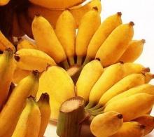 กล้วยน้ำว้าเสริมภูมิต้านหวัด 2009