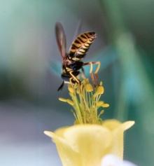 สำรวจธรรมชาติของ ผึ้ง