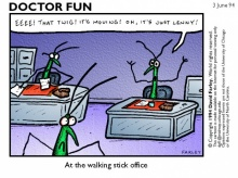 รู้มั้ย!!! แมลงสาบรู้จักเรียนรู้เหมือนคน