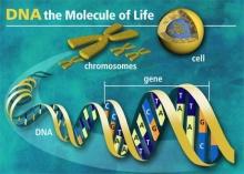 มหัศจรรย์ ดีเอ็นเอ (DNA)