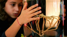 ชีววิทยาที่แปลกประหลาดของแมงมุมทะเลขายาว