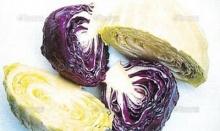 พบพืชผักเป็นยาโป๊ขนานธรรมชาติ กะหล่ำปลีคือยาไวอากร้า