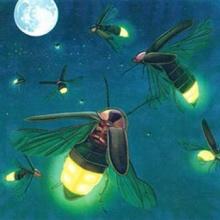 หิ่งห้อยมีแสงได้อย่างไร