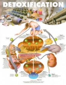 การล้างพิษ หรือ ดีท็อกซิฟิเคชัน (detoxification) คืออะไร