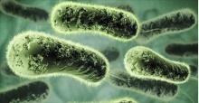 โลกจะเริ่มเข้าสู่ ยุคไร้ยาปฏิชีวนะ