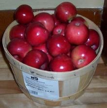 กินแอปเปิลวันละผลไม่ต้องไปหาหมอ?