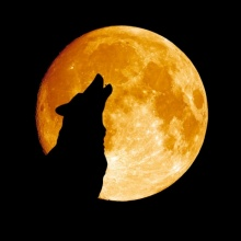"""วันขึ้นปีใหม่ปีนี้ พระจันทร์เต็มดวงพ่วง """"พระจันทร์หมาป่า"""""""