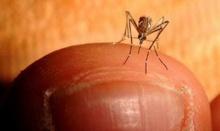 เชื้อโรคไวรัสชิคุนกุนยา ยังไม่มียา-วัคซีนป้องกัน