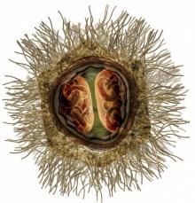 มีมี่ไวรัสยักษ์ เป็นสิ่งมีชีวิตแล้วจริงหรือ ???