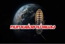 อึ้ง!นักวิทย์ฯเผยแมลงสาบพัฒนาภูมิคุ้มกันยาฆ่าแมลง จนอาจไม่มีทางกำจัดได้