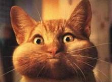 ~~~แปลกแต่จริง: แมวไม่รับรู้รสหวาน~~~
