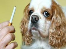 บุหรี่มือสอง ทำพิษแม้แต่สัตว์เลี้ยงก็ไม่เว้น