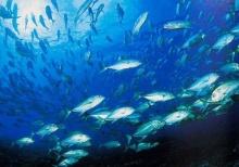 ในทะเลแทบไม่มีปลา ต้องตั้งฟาร์มเลี้ยงกันใหญ่ขึ้นทั่วโลก