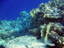 รู้มั้ย ปะการัง อยู่ในสภาวะน้ำกรดได้