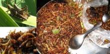 นักวิทยาศาสตร์แนะนำแมลงเป็นเมนูบนโต๊ะอาหาร