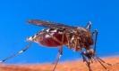 ยุงตัดต่อพันธุกรรมพร้อมแล้ว เตรียมปล่อยเพื่อสกัดการแพร่เชื้อไวรัส Zika ในบราซิล