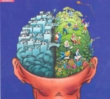 สมองที่หลายคนชอบเข้าใจผิดๆ