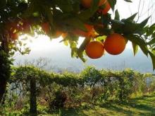 ผลิตเชื้อเพลิงชีวภาพใหม่ ทำจากผลไม้