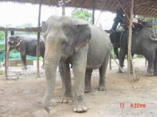 นักวิจัยไทยเจ๋ง!ดึงช้างบำบัดเด็กออทิสติกสำเร็จ