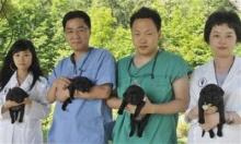 บริษัทโสมเจ๋ง โคลนนิ่งสุนัขดมกลิ่นมะเร็งมนุษย์