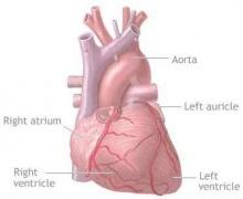 มหิดลคิดค้นแบบจำลองผ่าหัวใจ เพิ่มประสิทธิภาพบายพาส