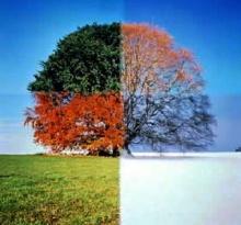 ต้นไม้ปลอมที่สามารถดูดซับก๊าซคาร์บอนได้เร็วกว่าต้นไม้จริงถึง 1000 เท่า