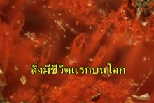พบฟอลซิลเก่าแก่ คาดเป็นสิ่งมีชีวิตแรกบนโลก