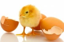มหัศจรรย์แห่งไข่