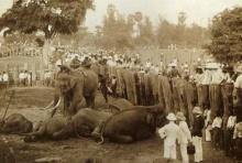 การคล้องช้างอันยิ่งใหญ่ต้อนรับเจ้าฟ้ามหาวชิราวุธ