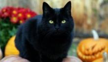 ความเชื่อเรื่องแมวดำ ตัวแทนแห่งลางร้าย ให้ระวังไม่ให้แมวข้ามศพ