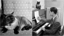 """ภาพที่คนไทยคุ้นเคย..""""คุณติโต""""แมวของ""""ในหลวง""""ที่คอยเฝ้ายามทรงเปียโน ณ พระตำหนักโลซาน"""