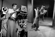 ชายผู้ทำให้ 'การถ่ายภาพแมว' กลายเป็นที่นิยมถึงปัจจุบัน