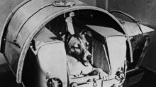 เบื้องหลังน่าเศร้า ไลก้า สุนัขอวกาศ